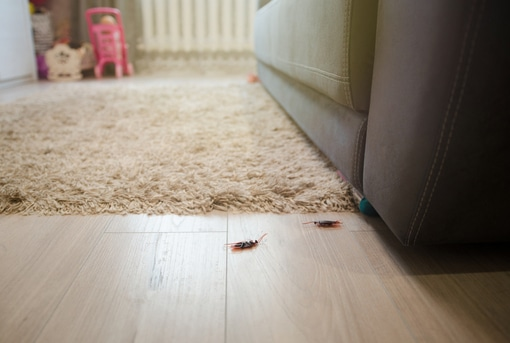 Cockroach Infestation in Home