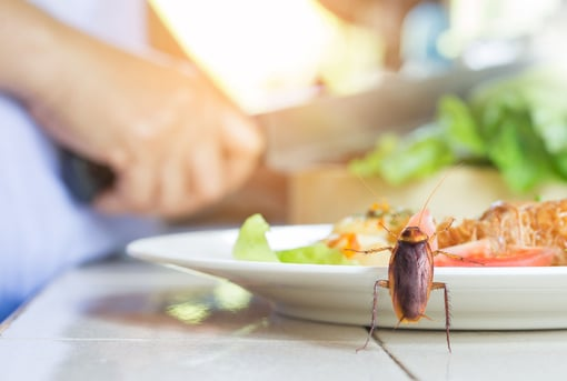 Cockroach Touching Your Food