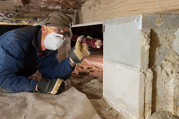 Home Inspection for termites